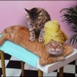 Cat massage.