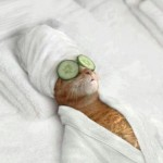 Cat in spa.